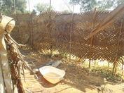 srilanka-north20130209(4).JPG